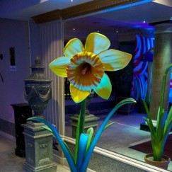 Daffodil_Prop1.jpg