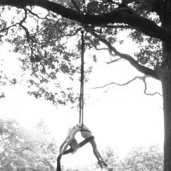 Delia_silk_tree.jpg