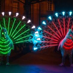 peacocks-preston-2014.jpg
