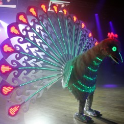 power_peacock_bird.JPG