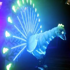 power_peacock_bird3.JPG