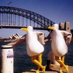 seagulls1a.jpg