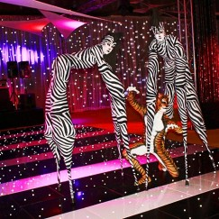 Stilt Walkers - Zebras 5